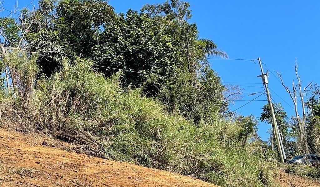 Carr 155 Km 31.5 Int Bo. Gato, OROCOVIS, Puerto Rico image 4