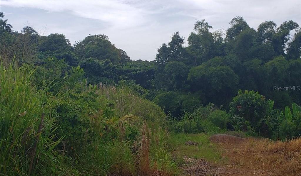 PR 110 KM 9.8 Bo. Cruz Sect. Isleta, MOCA, Puerto Rico image 11