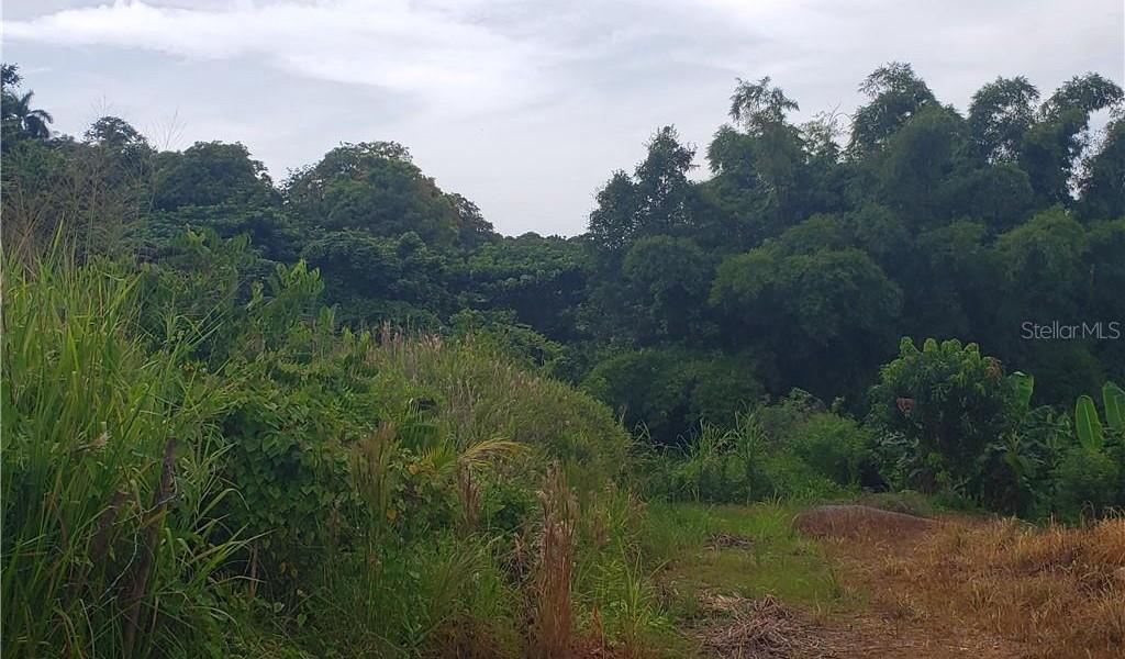 PR 110 KM 9.8 Bo. Cruz Sect. Isleta, MOCA, Puerto Rico image 9