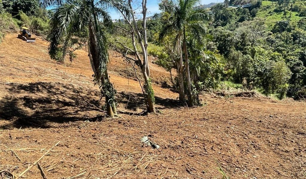 Carr 155 Km 31.5 Int Bo. Gato, OROCOVIS, Puerto Rico image 6