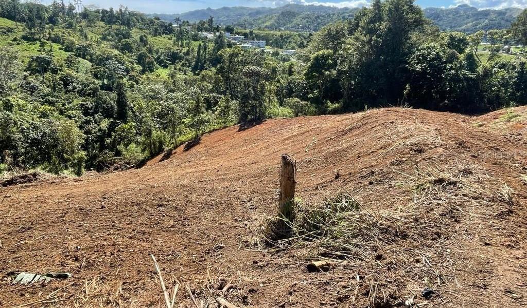 Carr 155 Km 31.5 Int Bo. Gato, OROCOVIS, Puerto Rico image 13