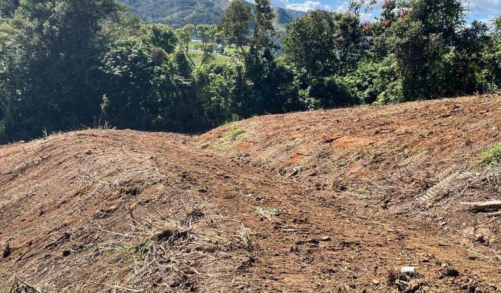 Carr 155 Km 31.5 Int Bo. Gato, OROCOVIS, Puerto Rico image 3