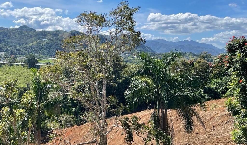 Carr 155 Km 31.5 Int Bo. Gato, OROCOVIS, Puerto Rico image 17
